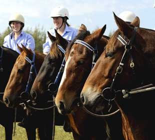 A selection of Tocal horses