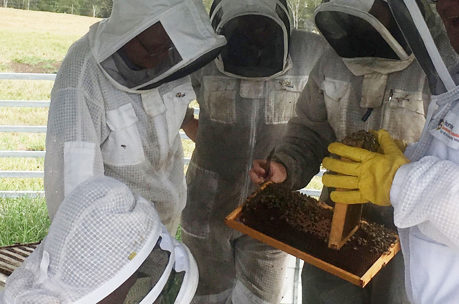 Image for Course AHC31818 Certificate III in Beekeeping