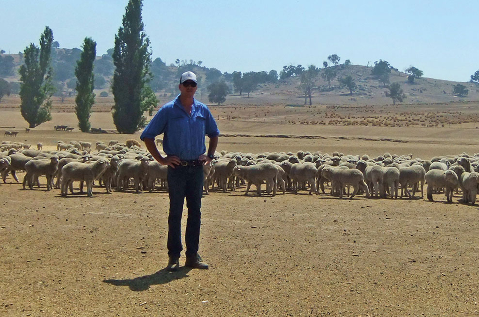 Tom with sheep in sacrifice paddock