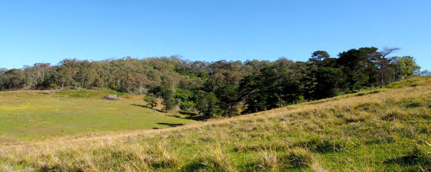 Pastures in paddock