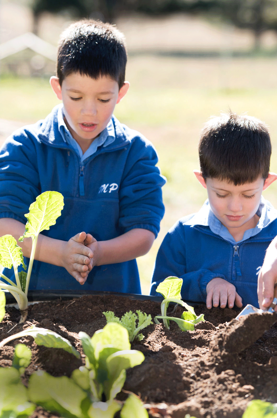 School children digging in garden