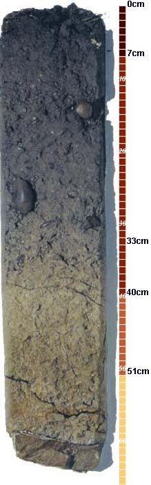 Soil-Profile-20
