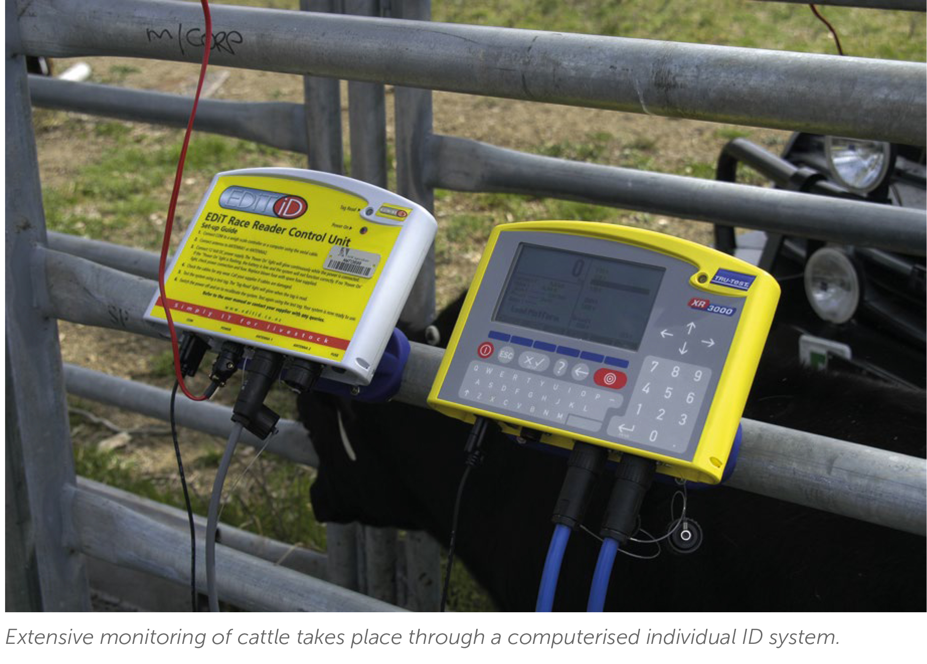 Extensive monitoring of cattle through a ID system