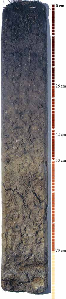 Soil-Profile-17