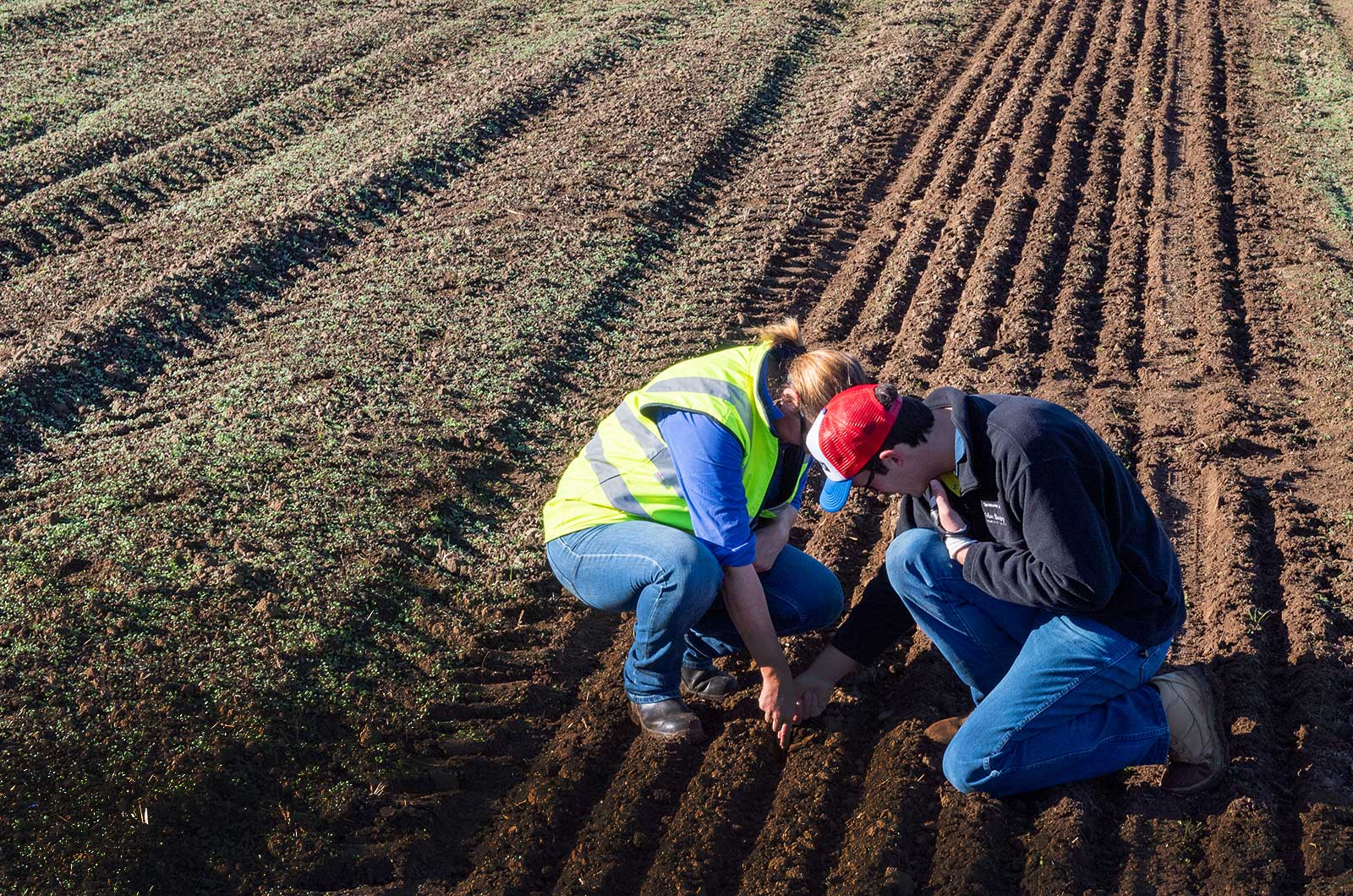 Farmers measuring seed depth