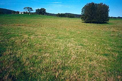 Soil-Profile-5-Phillips
