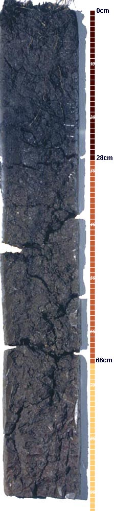 Soil-Profile-5