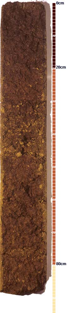 Soil-Profile-6