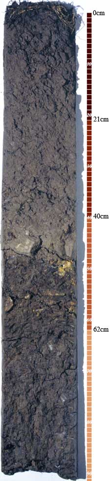 Soil-Profile-11