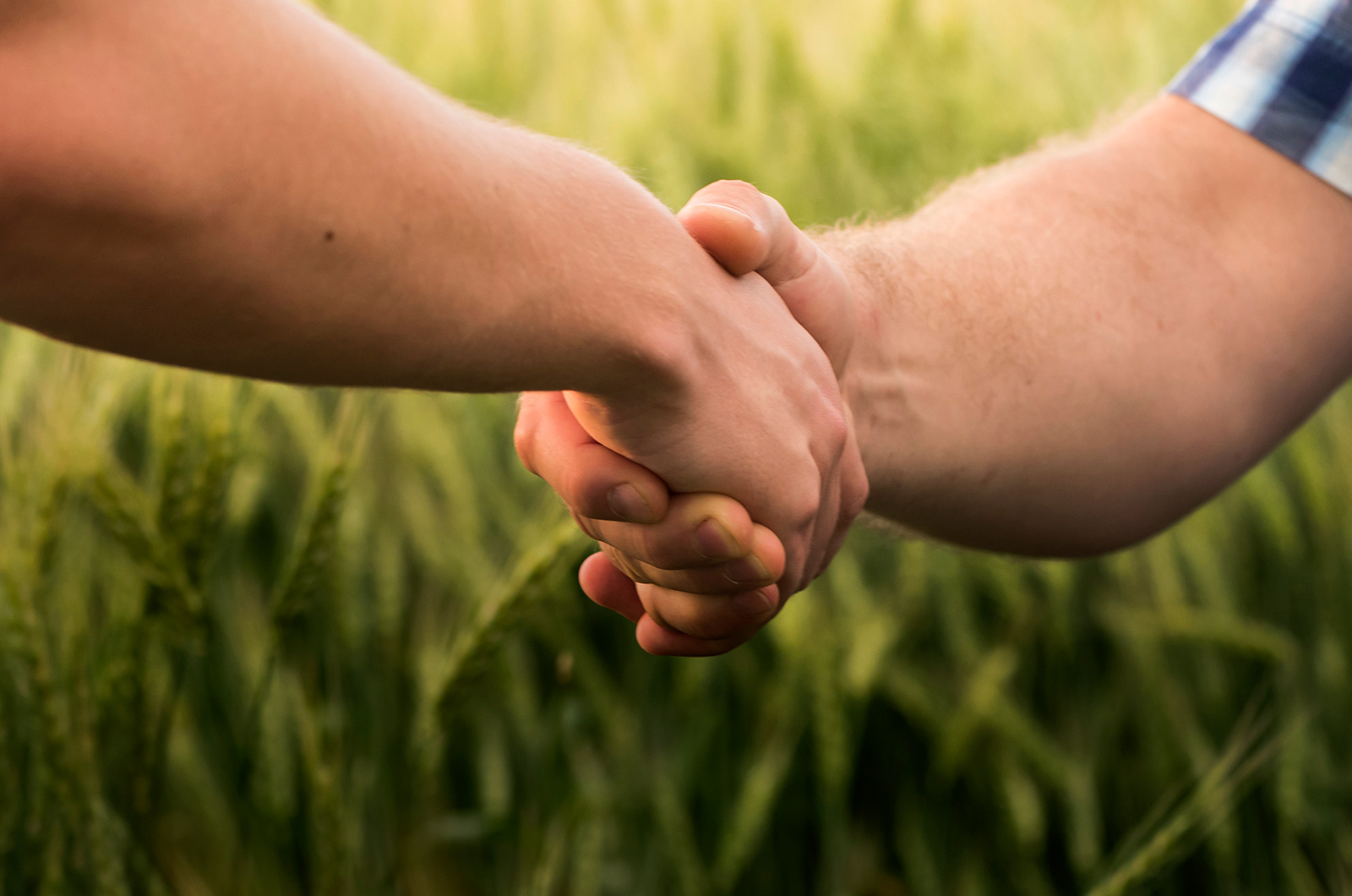 Handshake in wheat field