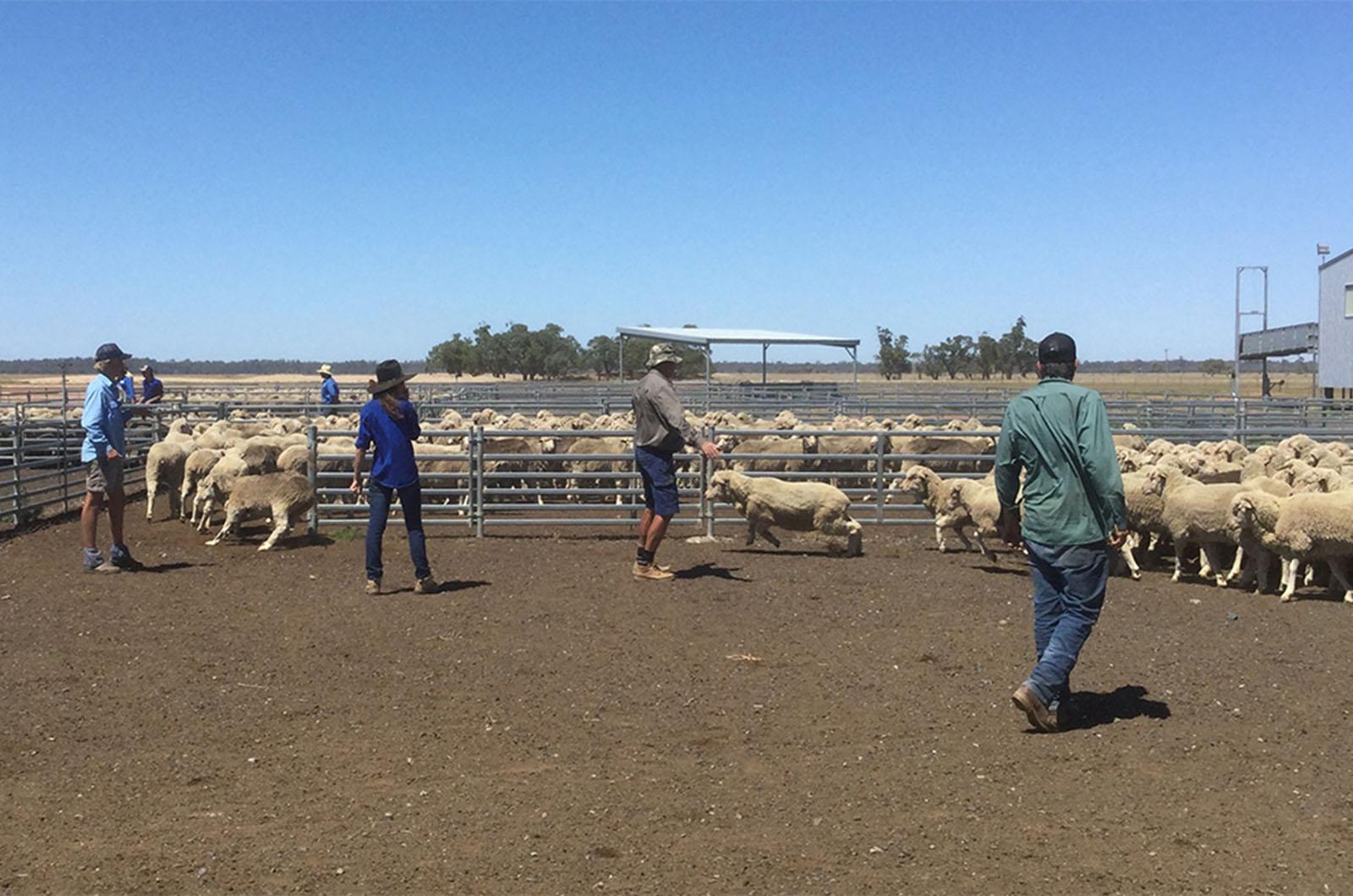 Image for Course Rural traineeship – Yanco